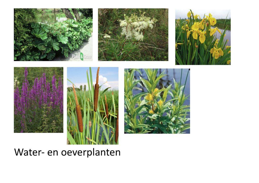 Water- en oeverplanten